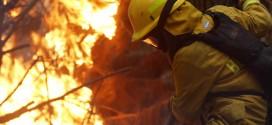 Incendios en Región de Bío Bío (Concepción) - Gentileza EMOL